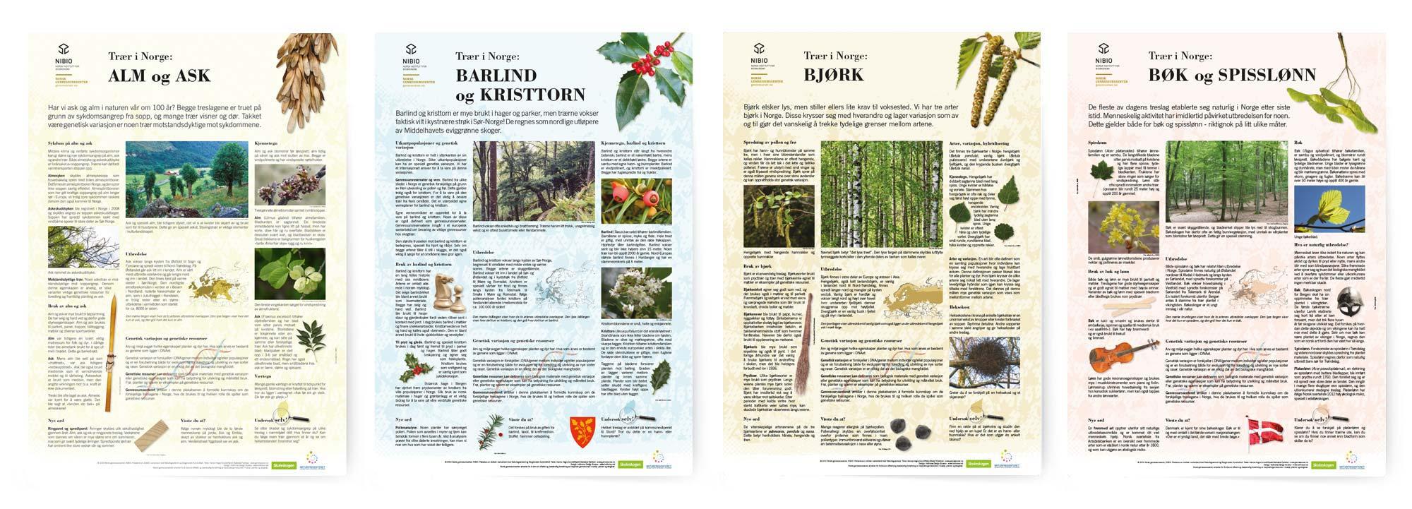 nibio trees x 4 nr.1